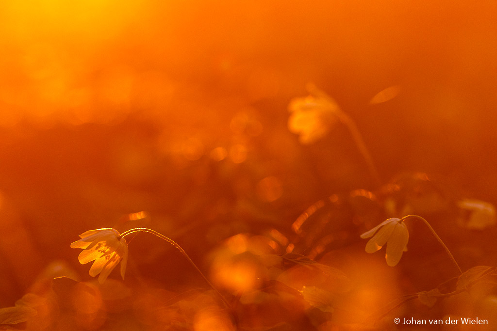 Gouden licht kun je benadrukken met telelens