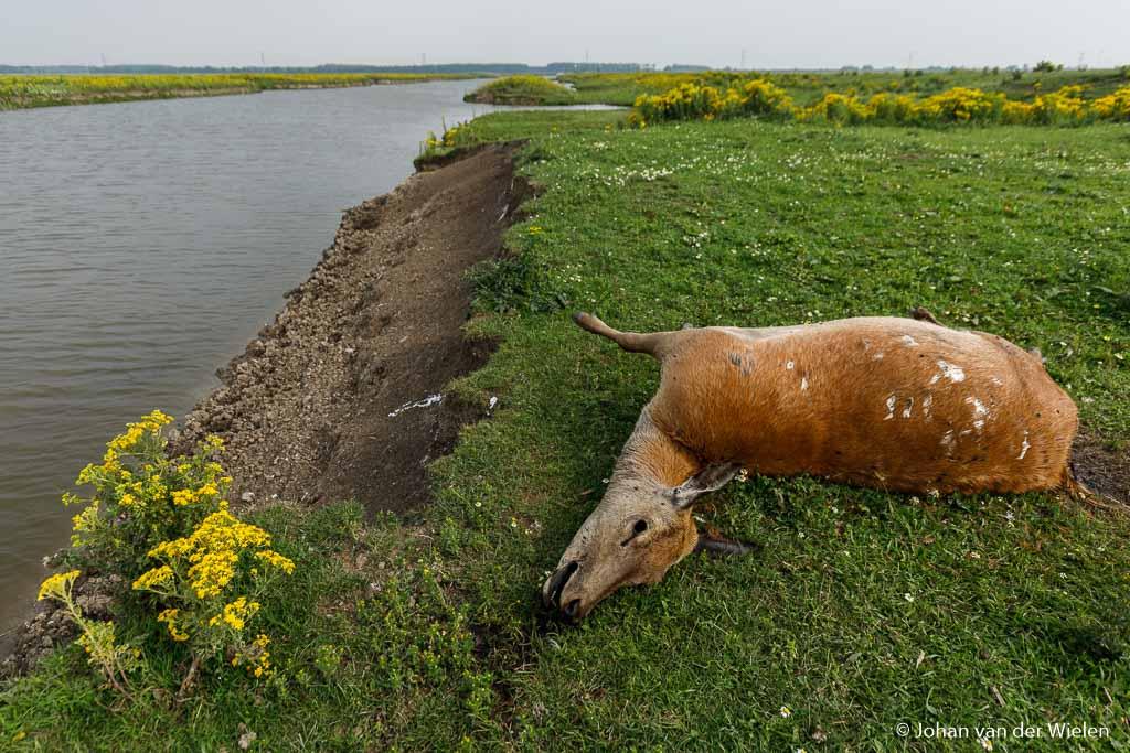 De aanblik van zo'n prachtig dier, dood naast je voeten is ook niet leuk...