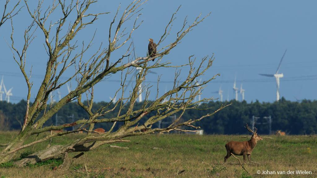 Nederlandse natuur: combinatie van gemaakt en natuurlijk