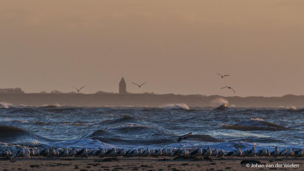 Speciaal beeld voor mijn verhaal, vogels op de Boschplaat van Terschelling met achter de heftige zee de kust van Ameland met de vuurtoren van Hollum.