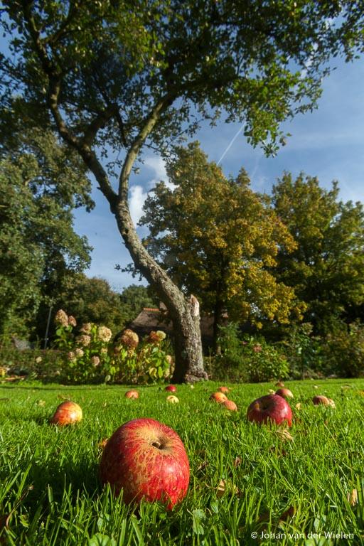 De appels bij onze appelboom in de tuin van de Boerderij.