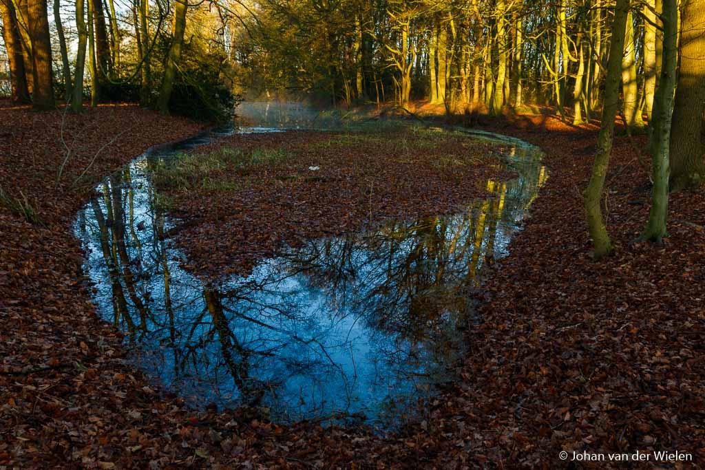 Het watertje in ons bosje...