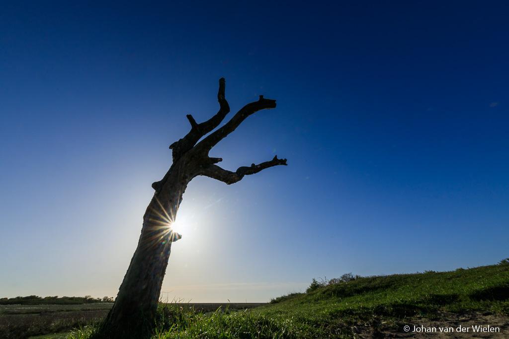 Ik lig minder dan een meter van deze boom af lig en het een klein dingetje in het landschap