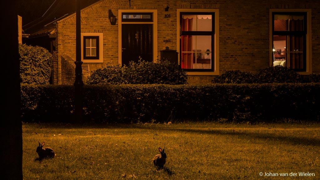 Zelfs het pittoreske dorpje van Schiermonnikoog heeft zóveel lantaarns dat de konijnen 's nachts in het dorp actief kunnen zijn.