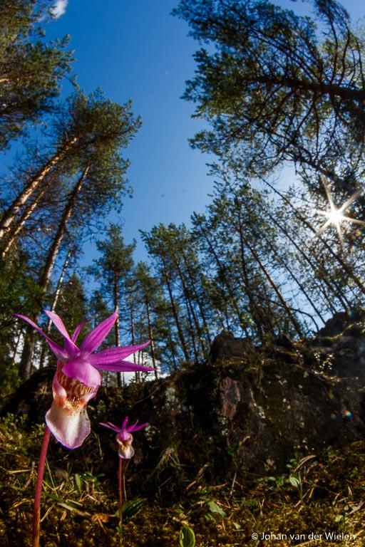 Combinatie van fisheye lens, stand A(v) voor het omgevingslicht en de ingebouwde flitser om de orchidee uit te lichten.