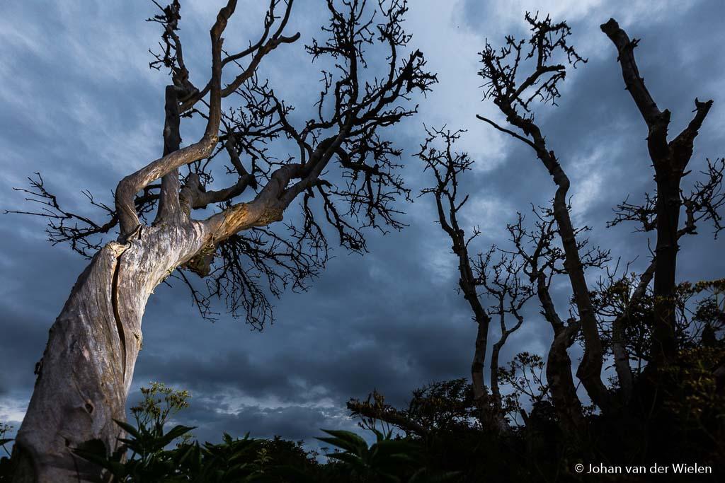 Bij een saaie lucht kan de combinatie van fikse onderbelichting en een flitslicht op de boom voor een extra dramatisch effect zorgen.
