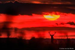 De zon zakt voor het edelhert... hoe symbolisch