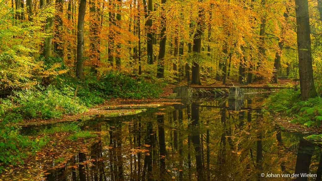 Het waterloopbos: vol ornaat herfstpracht… in tegenstelling tot de camera heeft het water wel een spiegel.