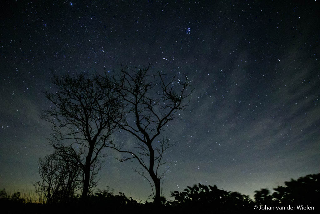 De eerste bomen zijn al kaal, had alleen 7 foto's nodig om ze scherp te krijgen.