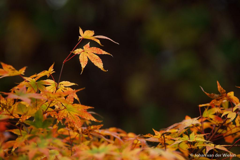 De testopstelling, herfstkleuren in de tuin met donkere achtergrond.
