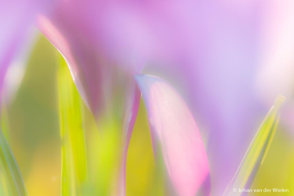 voorjaarsbloeiers als vormen en kleuren