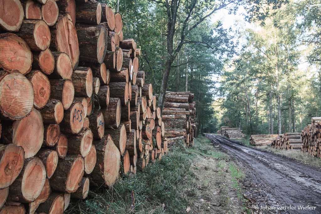 Onder het mom van 'verjonging' en 'schoonheid' heeft hout meer economische waarde dan de noodzakelijk CO2 opname....