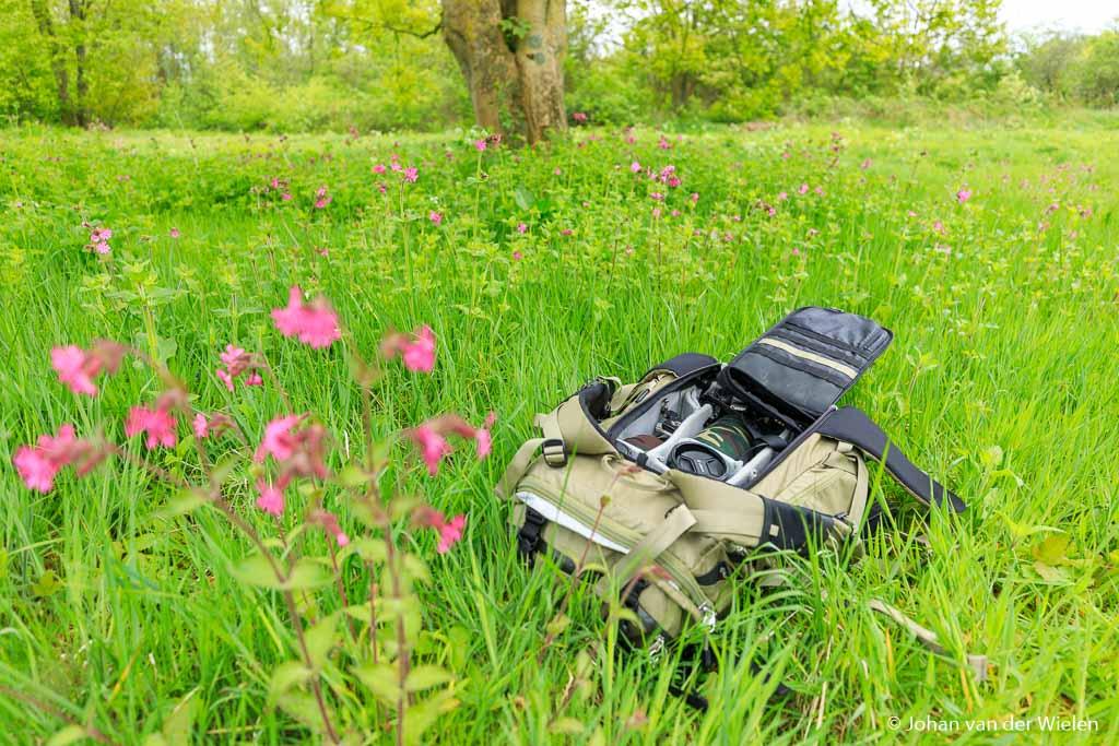 In het veld, te wachten op wat zijn baasje allemaal voor creatieve uitspattingen heeft.
