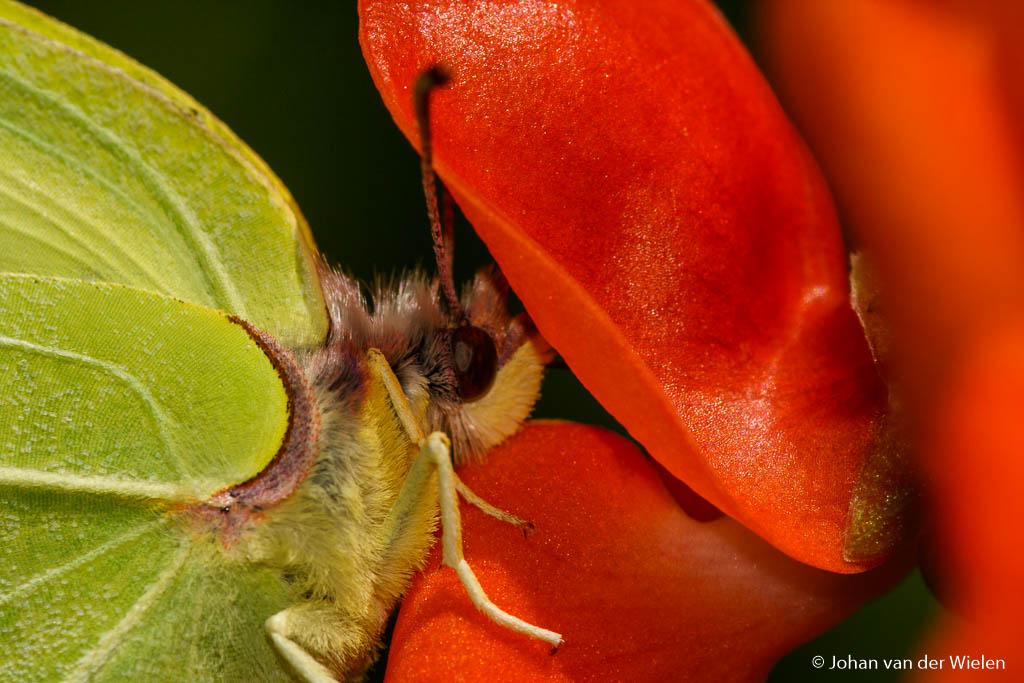 Abstract beeld met twee kleuren... als je langer kijkt blijkt het een vlinder op een bloem te zijn. Gemaakt met een macro voorzetlens.