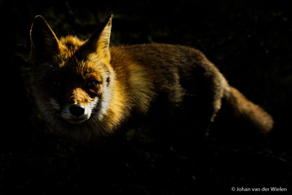 Op pad voor Natuurfotografie Magazine, haalt dit beeld mijn lat?