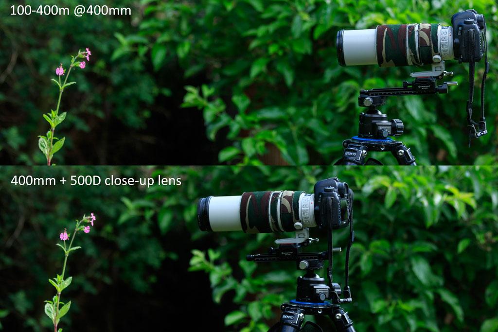 Mijn 100-400mm lens met en zonder 500D close-up lens. Deze lens heeft al een respectabel minimale scherpstelafstand van 1 meter, met voorzetlens wordt dat maar liefst 30 cm.