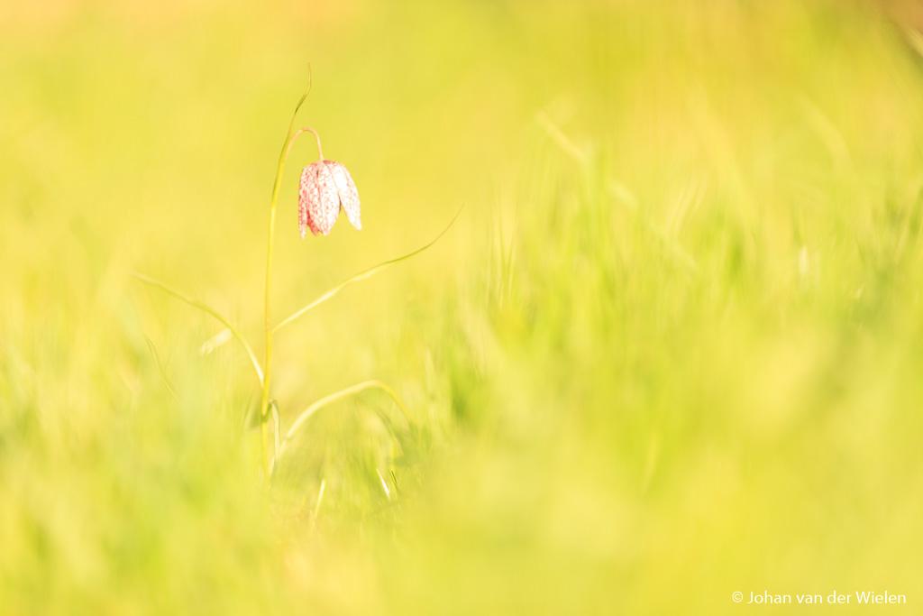 Zelfde setting alleen nu de belichting aangepast om een lichter en serenere omgeving te krijgen. De donkere bloem is nu echter overbelicht.