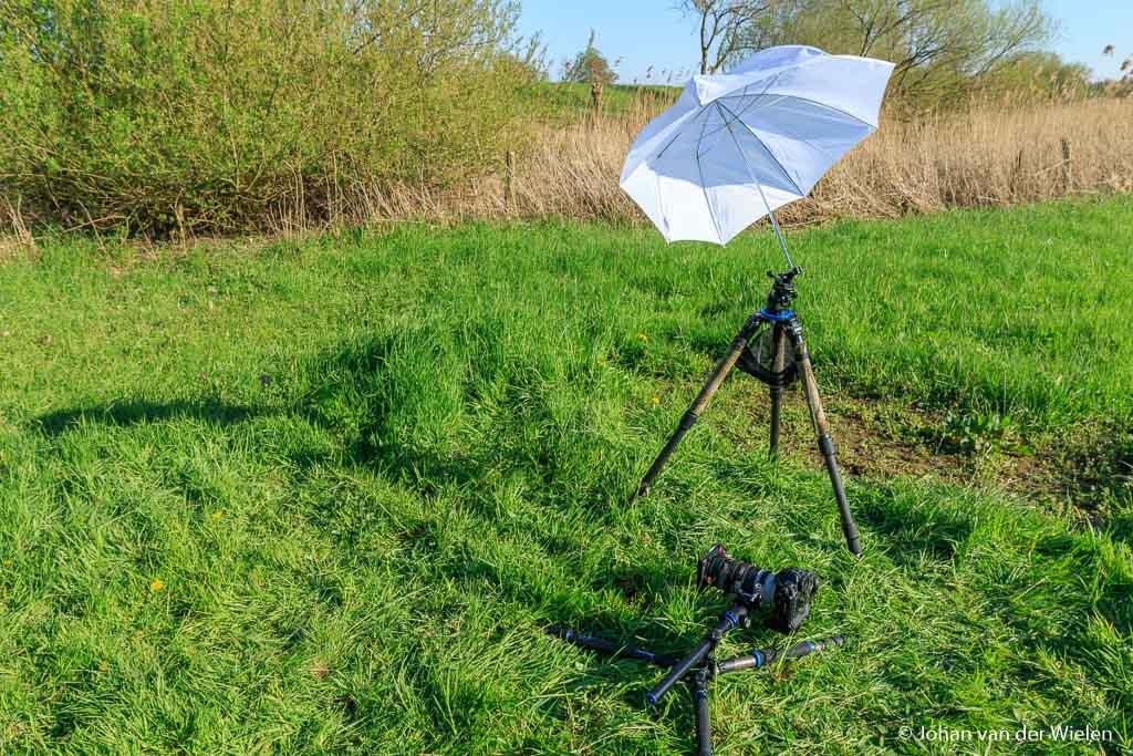 Met een witte paraplu heb ik alleen schaduw geworpen op de kievitsbloem, niet op de omgeving.