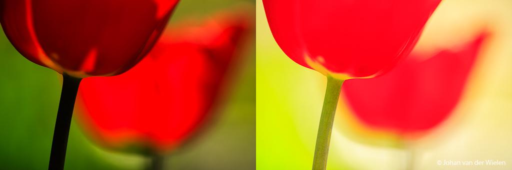 Zelfde verschilfoto (ISO100, f/3.5) maar nu met tulpen. Links zonder paraplu (1/1000) en rechts met paraplu (1/125) om het harde zonlicht tegen te houden.