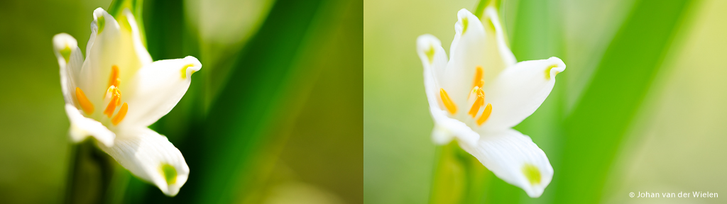 Lenteklokje. Zelfde foto (ISO100, f/2.8) met (rechts, 1/80) en zonder (links, 1/400) paraplu gefotografeerd. De rechter foto heeft veel egaler en zachter licht door de schaduw.