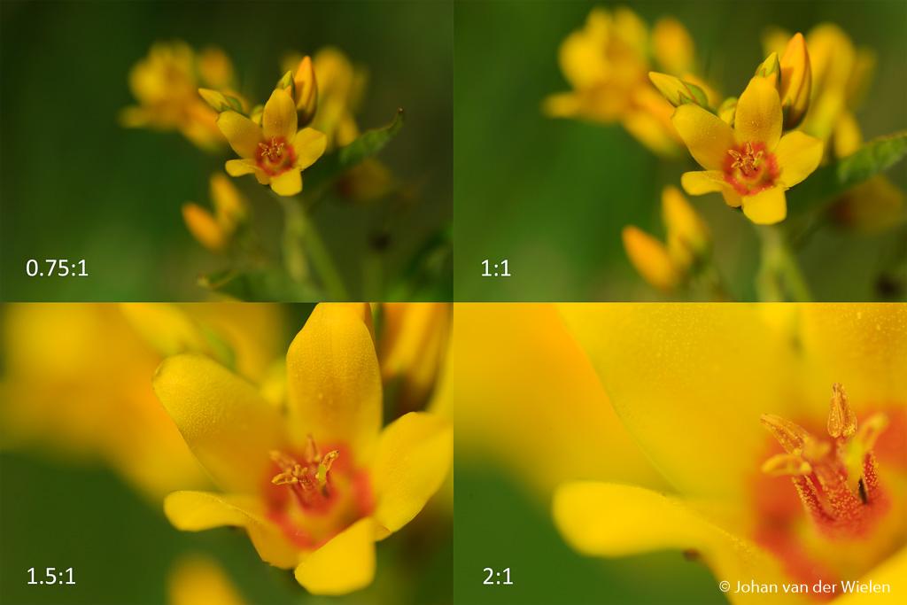 Een klein bloempje, kleiner dan 1 cm, deed dienst als dankbaar onderwerp.