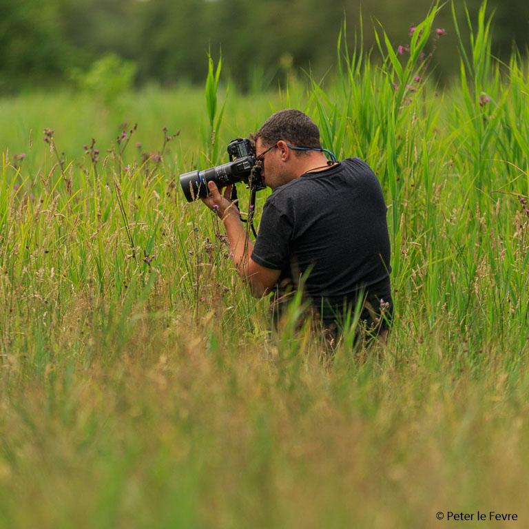 Ondanks dat deze lens het beste presteert vanaf statief heb je daar vaak met insecten te weinig tijd voor, zeker als ze al enigszins actief worden.