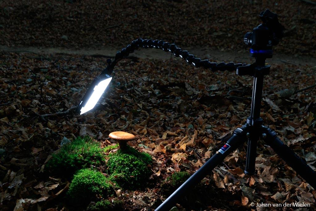 Paddenstoel verlicht met een kleine LED panel van Godox (LINK) die je met een flexibele arm van Wimberley (LINK) in alle richtingen boven, onder, links, rechts of achter je paddenstoel kan plaatsen. Deze LED panel zijn niet in kleur te variëren maar wel in lichtsterkte.