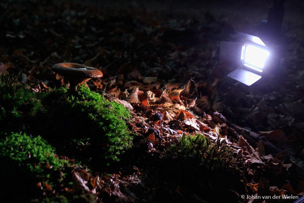 Een prachtig lampje voor dit soort fotografie, de Litra. Regelbaar in kleurtemperatuur en aantal lumens! Zeker de barndoors erbij bestellen om flare te voorkomen.